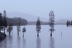 Panorama of trees growing in the lake, landscapes in China Royalty Free Stock Photo