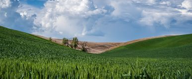 Panorama: Trees between hills in the Palouse Stock Image