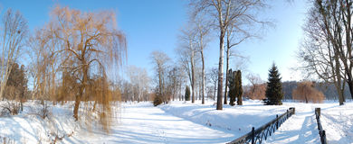 The panorama of trees and river covered with snow Royalty Free Stock Photo