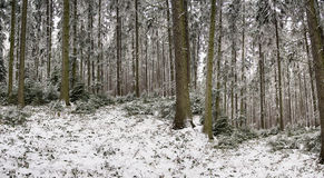 Panorama of trees in winter of Poland Stock Photos
