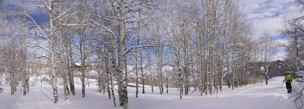 Panorama - tremule nude di inverno con le viandanti dello snowshow Immagine Stock