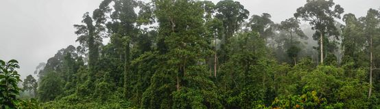 Panorama of Tropical Dipterocarp Rainfprest in Mist. Tropical Dipterocarp Rainfprest in Mist Stock Images