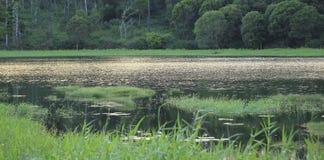 Panorama tropicale del lago Fotografia Stock