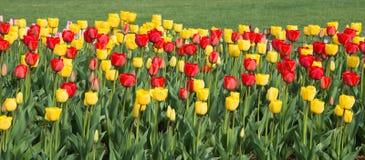 Panorama Tulip Flower Border foto de archivo libre de regalías