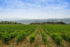 Panorama of tuscan vineyard royalty free stock photos