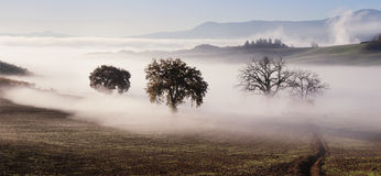 Panorama of Tuscany farmland landscape Royalty Free Stock Images