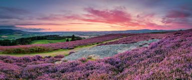 Panorama at Twilight over Rothbury Heather. Rothbury Terraces walk offers views over the Coquet Valley to the Simonside and Cheviot Hills, heather covers the Royalty Free Stock Photography