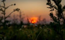 Panorama uguagliante fantastico del tramonto nel campo immagini stock libere da diritti