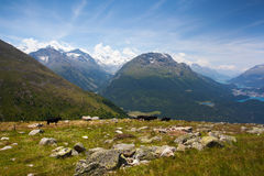 Panorama of the Upper Engadine from Muottas Muragl Stock Images