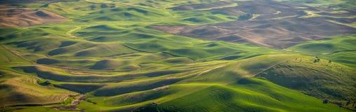 Panorama: uprawiać ziemię w Palouse Obrazy Royalty Free