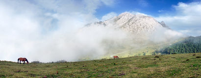 Panorama of Urkiola mountains with fog and horses Royalty Free Stock Photo