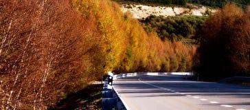 Panorama- väg med höstfärger och träd Arkivfoto