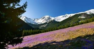 Panorama- vårsikt av chocholowskadalen i det Tatra berget Royaltyfri Foto