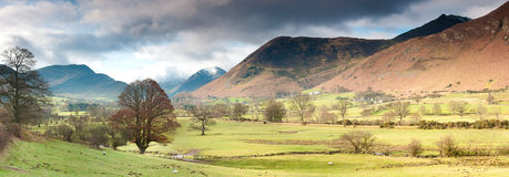 Panorama of valley and mountains of lake district with moody skies. Panorama of valley and mountains of lake district with sheep trees and grassland Stock Photography