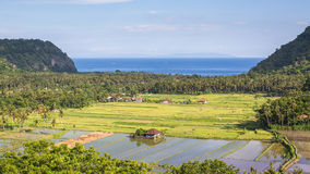 Panorama of valley with rice fields, on Indian ocean background, Bali island Royalty Free Stock Image