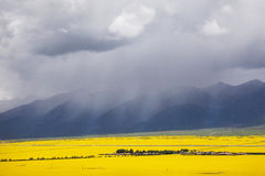 Panorama of the valley of yellow flowers. In the background, the mountains of Tibet and thunderclouds Stock Photos