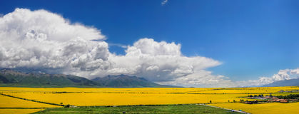 Panorama of the valley of yellow flowers. In the background, the mountains of Tibet and thunderclouds Royalty Free Stock Photo