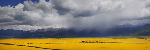 Panorama of the valley of yellow flowers. In the background, the mountains of Tibet and thunderclouds Royalty Free Stock Photography