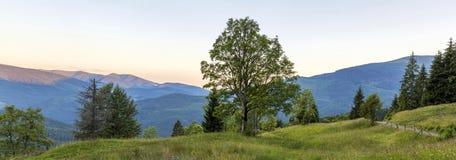 Panorama van bergen bij zonsondergang met grote boom die zich bij voorzijde bevinden Stock Afbeeldingen