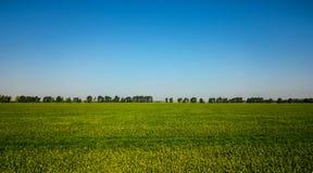 Panorama van bloeiende gebieden en blauwe hemel royalty-vrije stock afbeelding