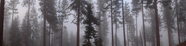 Panorama van Bomen in Mist Stock Afbeelding
