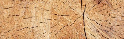 Panorama van boom in een sectie Royalty-vrije Stock Afbeelding