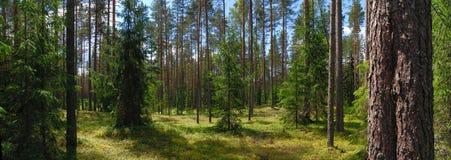 Panorama van bos stock afbeelding