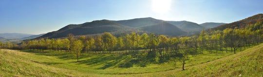 Panorama van bosplatteland Royalty-vrije Stock Afbeeldingen