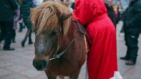 Panorama van bruine poney op Kerstmisfee stock footage