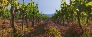 Panorama van Chileense wijngaard Chileens landschap stock foto