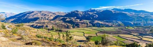 Panorama van Colca-Canion, Peru, Zuid-Amerika.  Incas om de Landbouwterrassen met Vijver en Klip te bouwen. stock foto