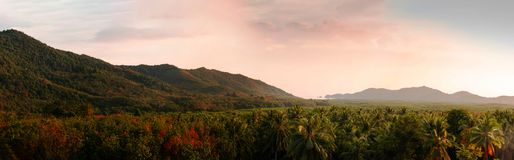 Panorama van de bergen en het mooie tropische bos in de zomer wanneer het licht van middag de berg resulterend in raakt royalty-vrije stock afbeeldingen