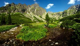 Panorama van de de kreek het brede spruit van de berg Stock Afbeelding