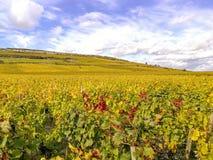 Panorama van de druivengebieden in de herfst op de heuvels in Bourgondië Frankrijk royalty-vrije stock foto