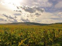Panorama van de druivengebieden in de herfst op de heuvels in Bourgondië Frankrijk stock afbeelding