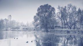 Panorama van de herfst het verkopen met eenden. Zwart-wit beeld. stock afbeelding