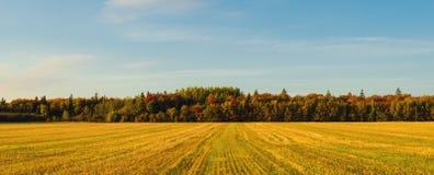 Panorama van de landelijke scène van PEI bij daling stock foto