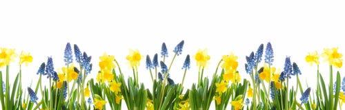 Panorama van de lentebloemen tegen een witte achtergrond stock fotografie