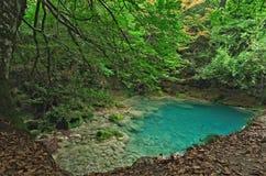 Panorama van de verborgen vijver in het bos stock afbeelding