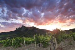 Panorama van de wijngaarden stock foto