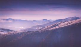 Panorama van de winterbergen bij zonsopgang Landschap met mistige die heuvels en bomen met rijp worden behandeld Stock Afbeeldingen