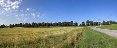 Panorama van de zomerlandschap Stock Fotografie