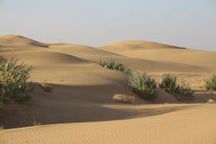 Panorama van duinen in de Woestijn van Thar, Rajasthan, India Stock Afbeelding