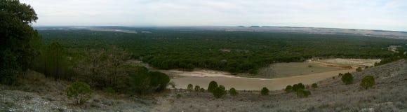 Panorama van een bos Stock Afbeeldingen