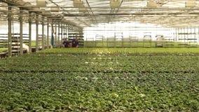 Panorama van een grote moderne serre Grote heldere serre met een transparant dak en bloeiende bloemen stock video