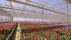 Panorama van een grote moderne serre Grote heldere serre met een transparant dak en bloeiende bloemen stock videobeelden
