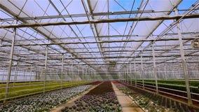 Panorama van een grote serre met bloemen stock videobeelden