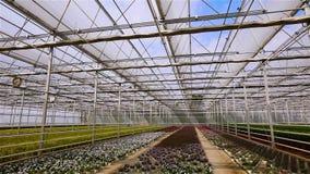 Panorama van een grote serre met bloemen stock footage