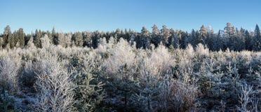 Panorama van een koude bevroren ontbossing in het hout stock afbeeldingen