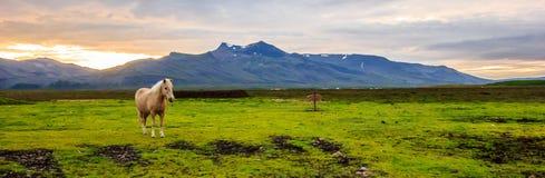 Panorama van een mooi lichtbruin paard in het landbouwlandschap bij schemering met bergketen als achtergrond royalty-vrije stock foto